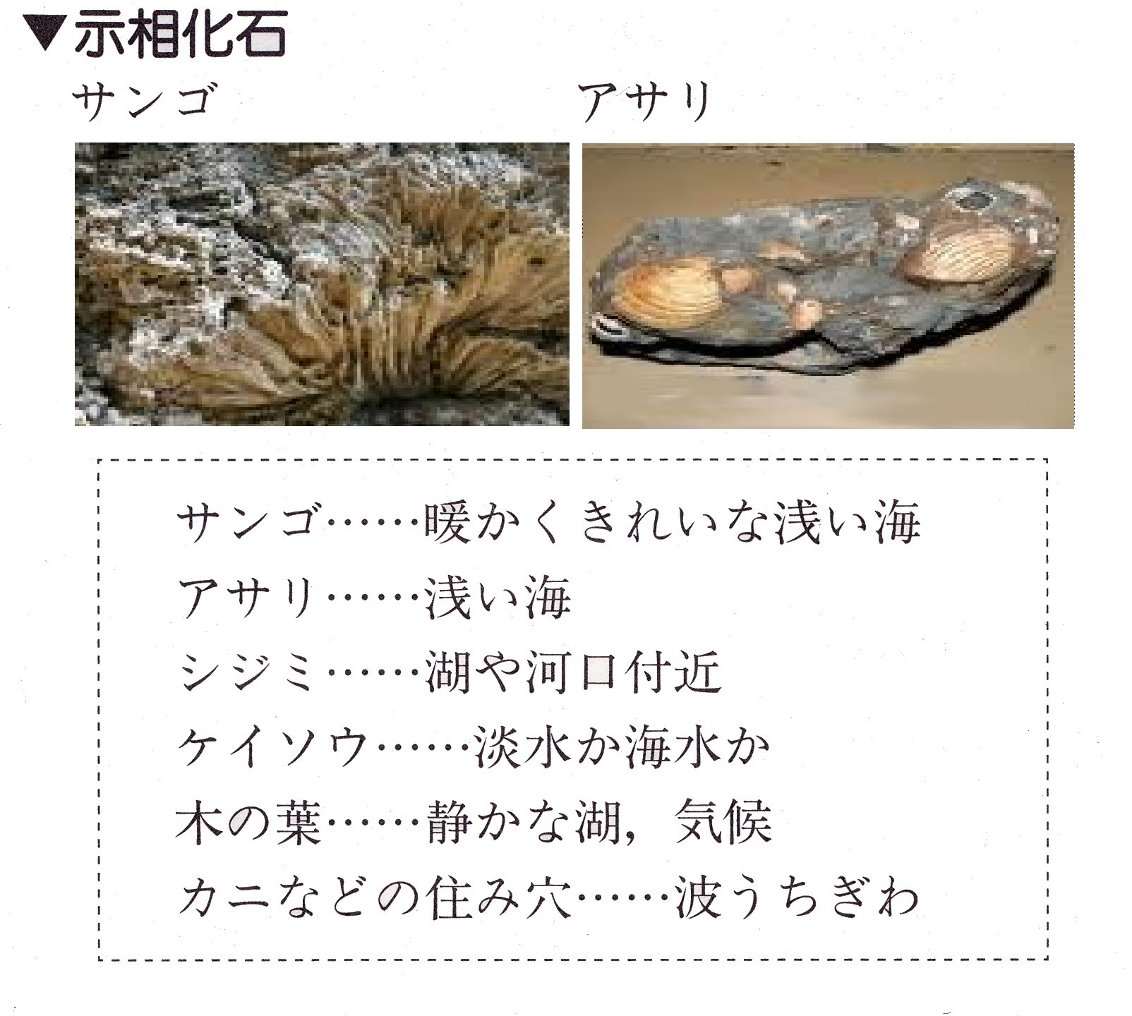 相 化石 示